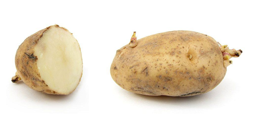 cut potato with eyes
