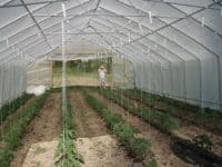 rope support for pepper plants