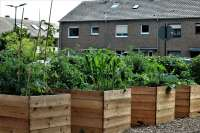 wooden raised garden beds