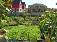 High Point Community Garden