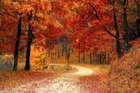autumn fall road