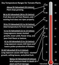 Thermometer Infographic Temperature Ranges for Tomato Plants