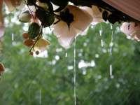 rain wedding flowers
