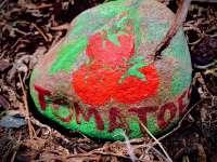 tomato rock plant label