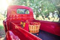 wedding venue red truck apple orchard