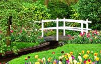 cute garden bridge flowers