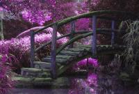 tree log branch bridge