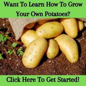 grow your own potatoes sidebar