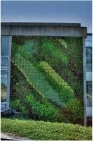 Burnaby green wall living wall
