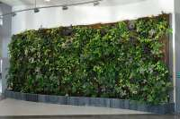 living wall green wall
