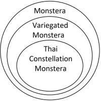 Monstera Venn Diagram